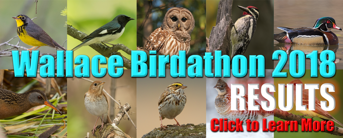 Wallace Birdathon 2018 – Results